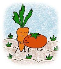Une aide précieuse aux débutant ou comment organiser ses semis pour optimiser la récolte!