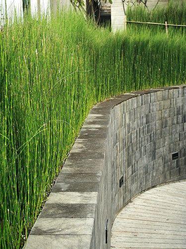 love horsetail reeds - Garden Chic