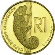 Reptilien: Buntes Zwergchamäleon