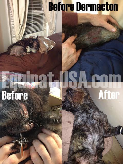 Dog Atopic Dermatitis Treatment Natural