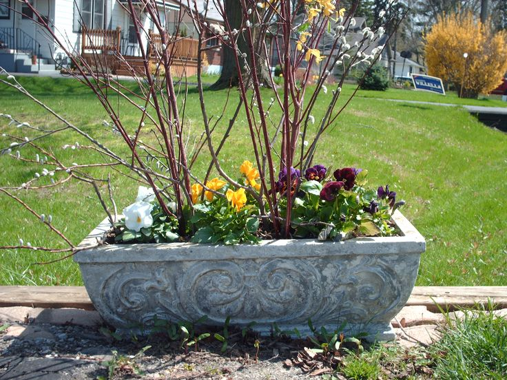 Spring window box with pansies and pussy willow