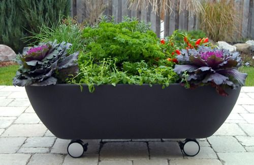 These bathtub container gardens, on wheels, are made by a Canadian company out of 100% recyclable polyethylene plastic. The Mobile Garden is large enough to grow herbs and vegetables, and because it is on wheels, the bathtub planter can be moved easily around the deck or patio, in or out of the sun.