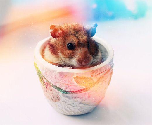 Hamsterxx