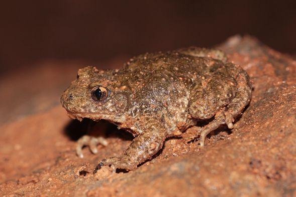 Descubren Dos Nuevas Especies De Anfibios De La Peninsula Iberica