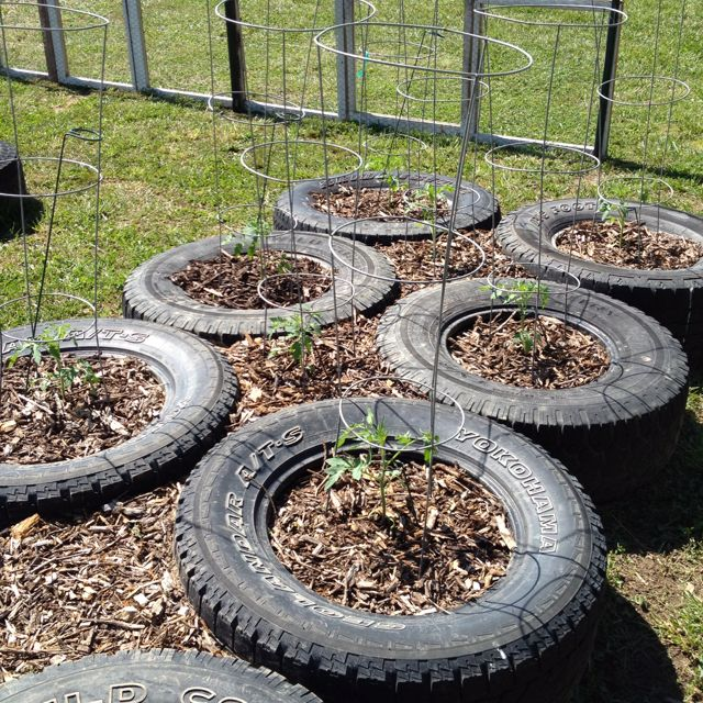 Tomatoes in my raised bed tire garden... Another view