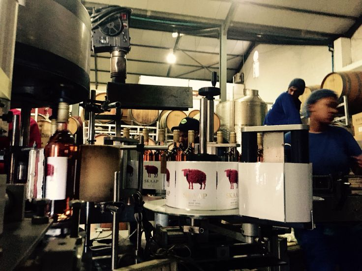 The bottling of #Skaap #Okuphunki #2015 a smooth #dry #rose from the Cotes du #Stellenbosch. Buy online at #skaapwines.com