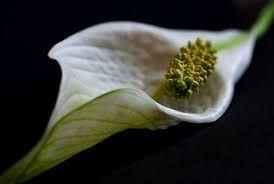 Znalezione obrazy dla zapytania Egzotyczne kwiaty