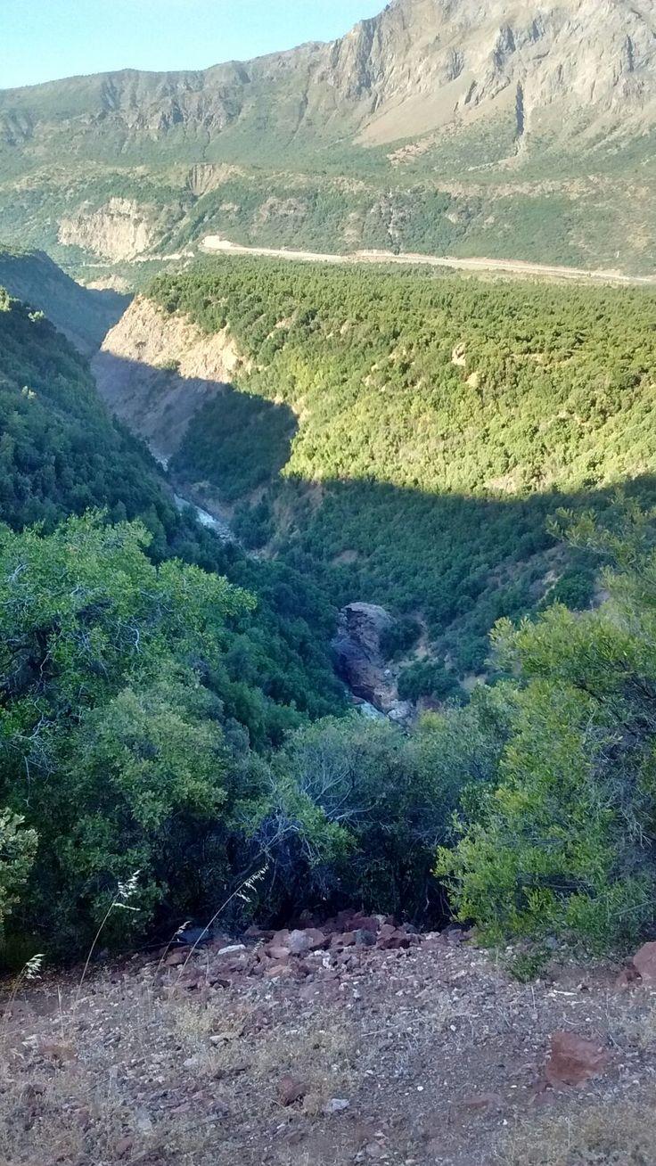 #reserva Nacional Los cipreses. #chile