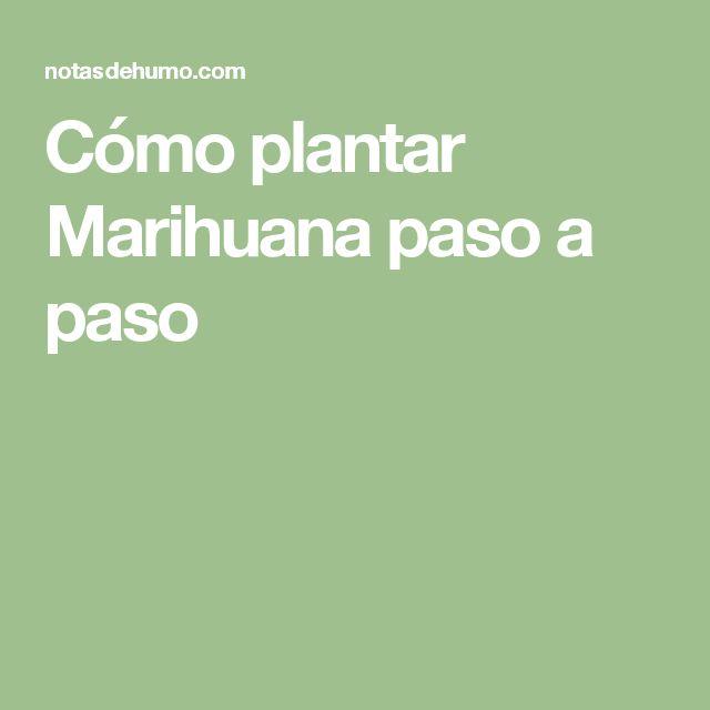 Cómo plantar Marihuana paso a paso