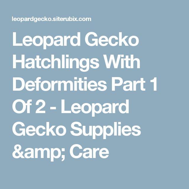 Leopard Gecko Hatchlings With Deformities Part 1 Of 2 - Leopard Gecko Supplies & Care