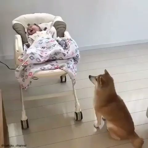 Cute Dog And Adorable Baby