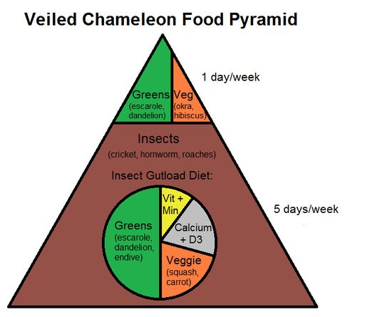 Learn about Veiled Chameleon Nutrition with a Veiled Chameleon Food Pyramid!