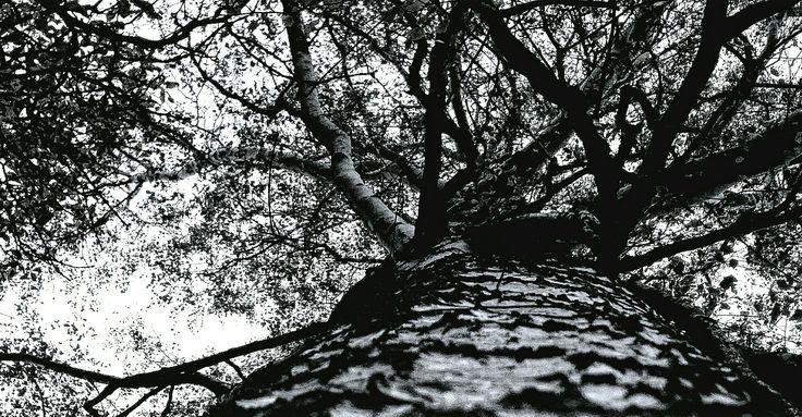 #winter #tree