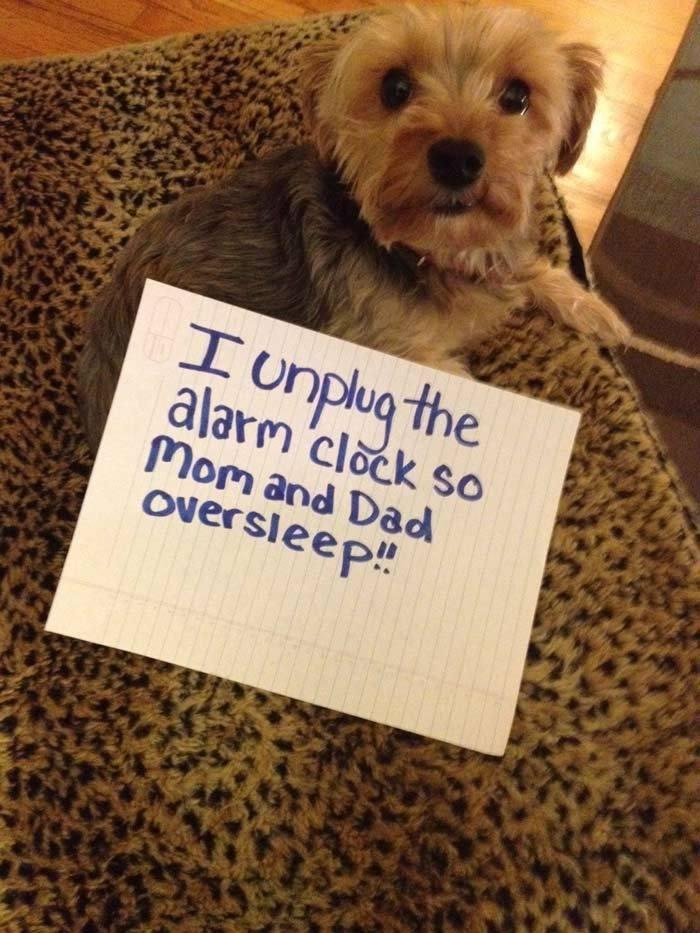 I Unplug The Alarm Clock