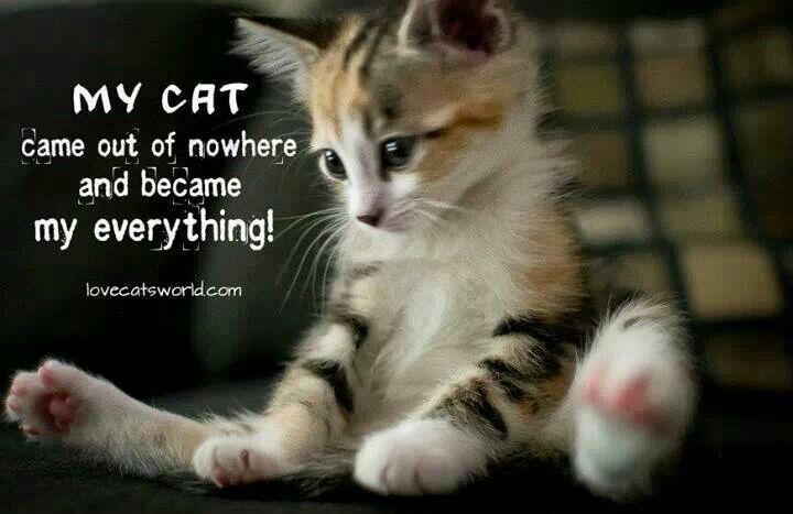 Cute Cat Quotes. QuotesGram |Cute Kittens Quotes