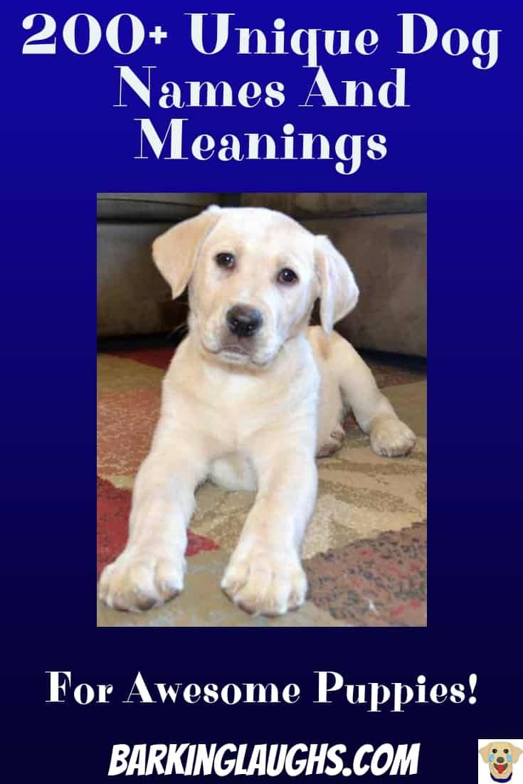 Unique Dog Names And Meanings 200 Unusual Names And Name Quiz Dog Names Boy Dog Names Unique Puppies Names Female