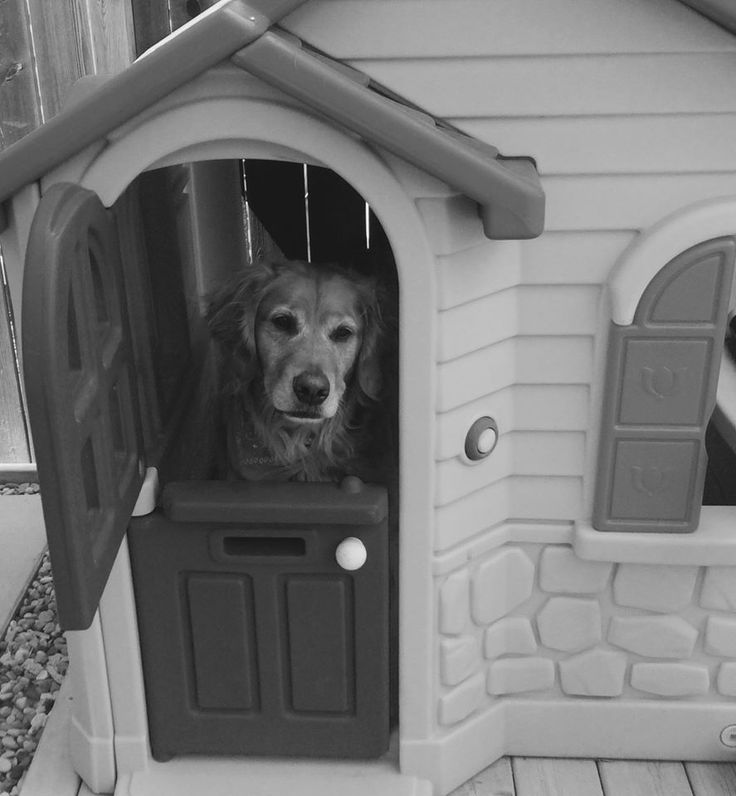 Charlie in a doll house!