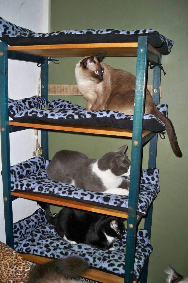 Cama Para Gatos Cosas Pa Los Cuchos Pinterest Gatos