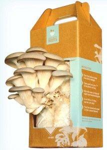 Sustainable Grow Your Own Mushroom Kits