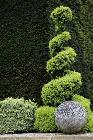 Spiral topiary at Clandon Park, Surrey.