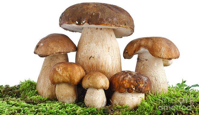 Otoño, temporada de #setas... ¿Sabes cuales son comestibles y cuáles son tóxicas? http://www.cuidadosfarmaceuticos.com/blog-de-farmacia/otono-temporada-de-setas-conoces-todas-sus-propiedades/
