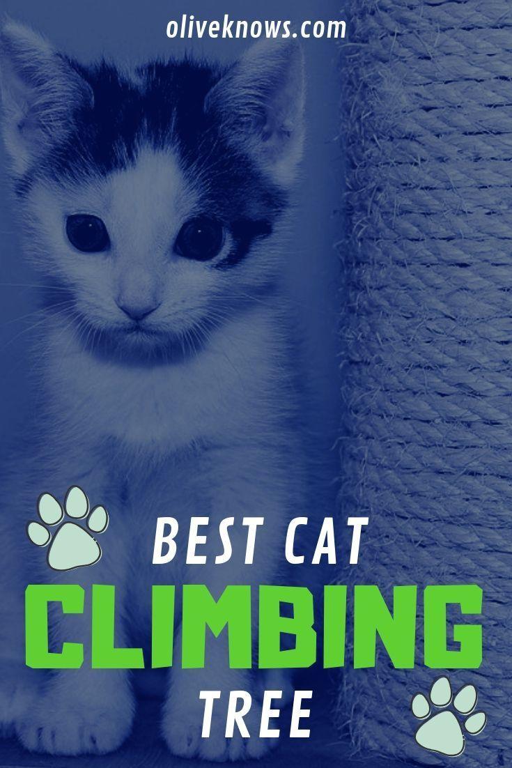 Choosing The Best Cat Climbing Tree With 2019 Picks Cat