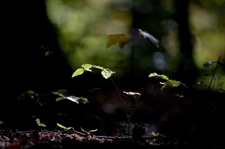 The light on the forest floor -