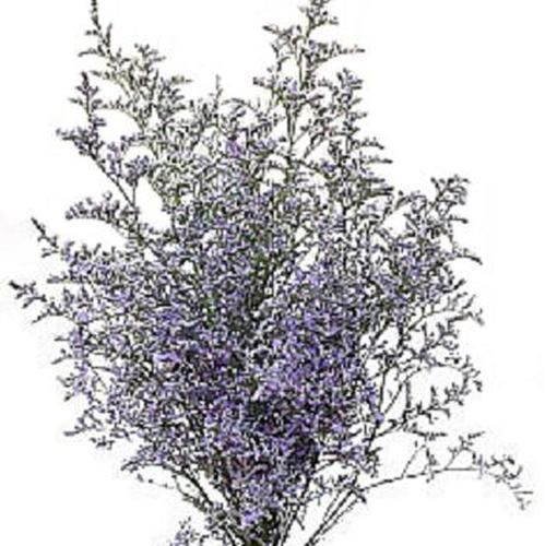 Cake Table. Wholesale Limonium Misty Blue Qu Eight Box - Blooms by the Box