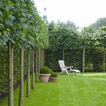 love the tree line in front of the ivy fence behind. great depth and visual great.