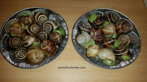 #snails in #garlic #butter