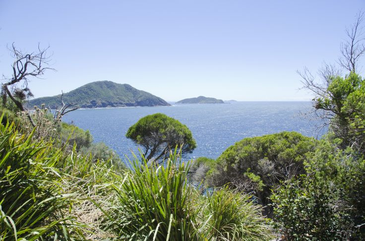 Tomaree Head Ocean Track: There are some amazing views along the track. To get here, you walk a little way up Tomaree Head, at Shoal Bay, then follow the ocean track ... #portstephens #tomareehead