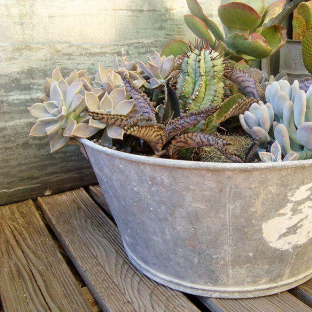 1000 id es propos de pots succulentes sur pinterest pot plante grasse plantes grasses et - Plantes grasses en pot ...