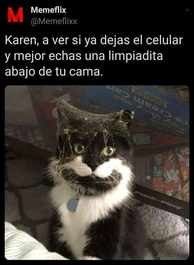 Pin De Why Love Between Marinette And En Meme Gato En 2020 Memes Comicos Memes Divertidos Memes Graciosos De Animales