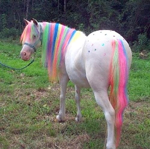 pretty pony: Animals, Stuff, Horses, Color, Ponies, My Little Pony, Rainbows, Unicorns, Rainbow Horse