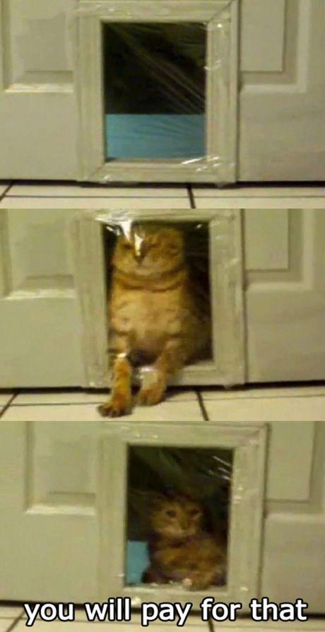 Cat pranks