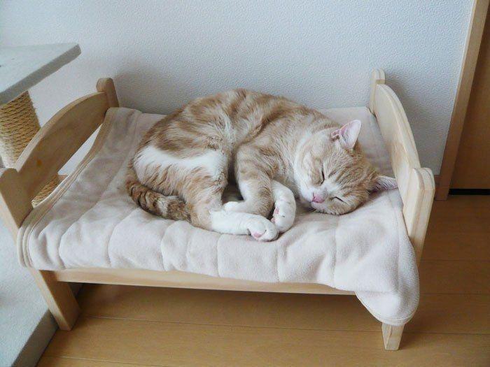 Спать на кровати смешные картинки