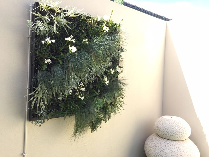 """Client testimonial... """"Thank you for giving my small space a WOW factor. Your service from start to finish was a seamless effortless experience. I am so grateful I chose your team. You made some great choices, meeting all my needs. Happy potting""""  Vertical Garden created by Luscious Living Spaces using HG1 Living wall planter www.lusciouslivingspaces.com.au"""