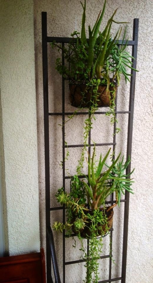 Best 20+ Iron trellis ideas on Pinterest | Metal garden trellis ...