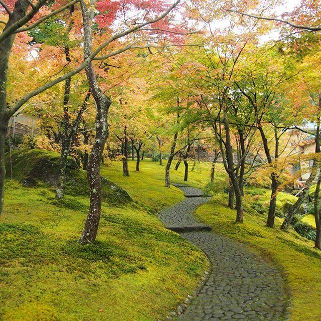 【karatymarty】さんのInstagramの写真をピンしています。《#神奈川#また箱根#箱根#箱根美術館#庭園#紅葉#色付く#林#苔#庭#石畳み#道#秋#混んでたのに#一瞬#誰も居なくなった#シャッターチャンス#絵のような景色 #garden#autumnleaves#maple#japanesemaple#autumncolors#moss#mossgreen#stone#cobblestone#noone#chance》