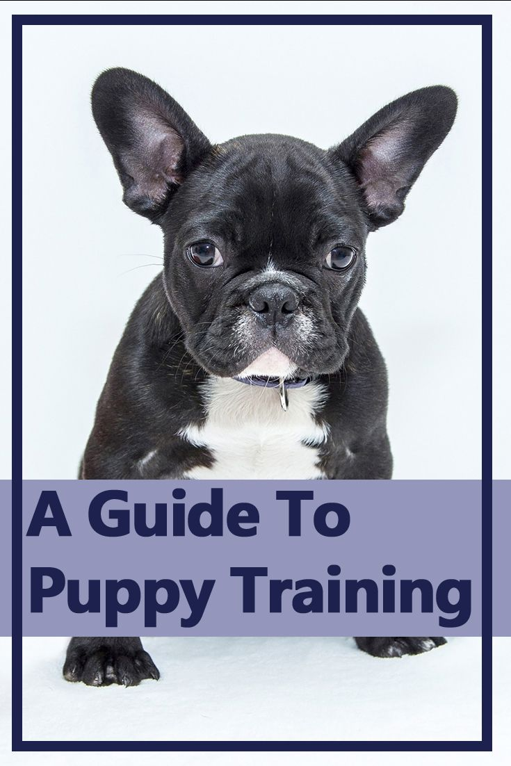 Puppy Training Dog Names Miss My Dog Dogs