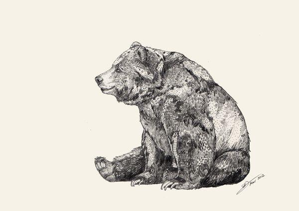 Bear // Graphite Art Print by Sandra Dieckmann | Society6