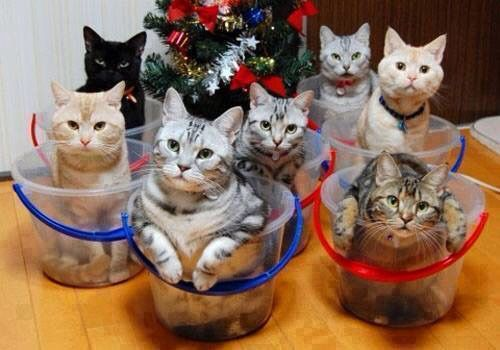 Buckets of kitties! Love them