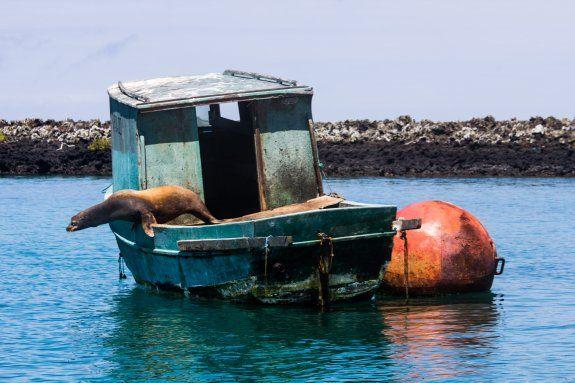 Seal takes a dip #activeadventures.com Jake Saxman, 'Tortuga', May 2013