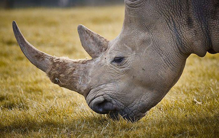 national-park-shoots-people-protects-rhinos-kaziranga-10