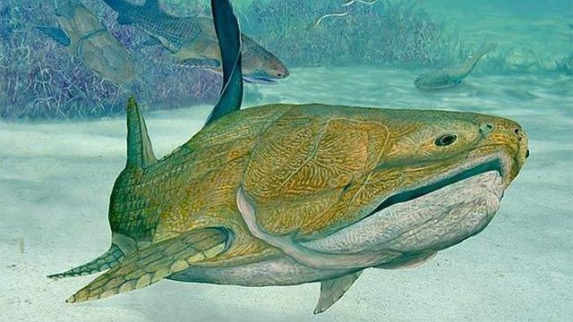 This ancient fish may have been the first animal to have a face