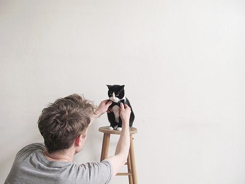 Kitten photo shoot. Don't know why but this makes me laugh.: Tuxedos Cat, Kitty Cat, Bows Ties, Bowties, Photos Shoots, Catlovers, Cat Lovers, Black Cat, Animal