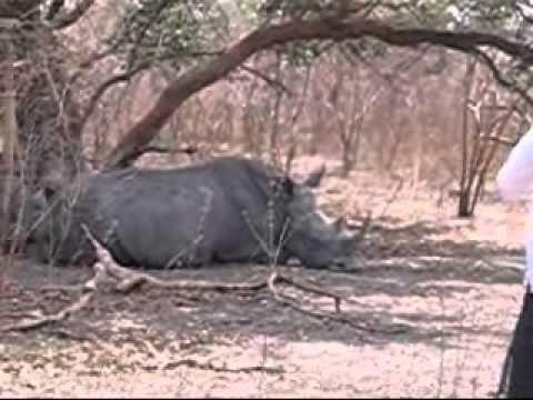 Fathala Game Reserve, Senegal, April 2008 #ToniJackman #Senegal #Fathala