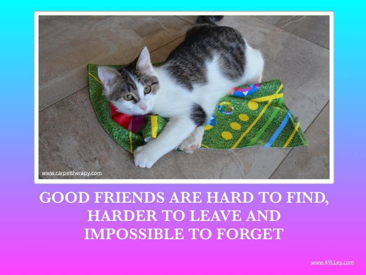 http://www.49lley.com/c/carpet-therapy … #goodfriends #therapyCats #TherapyDog