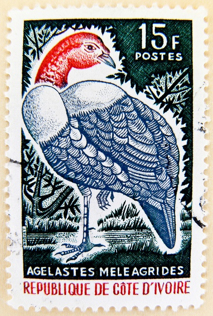 wonderful stamp Ivory Coast 15F Agelastes Meleagrides (Guineafowl, Pintade,Perlhuhn) timbre Côte d'Ivoire selo Costa do Marfim sellos Costa de Marfil francobollo Costa d'Avorio Почтовая марка Кот-д'Ивуар 邮票 科特迪瓦 切手  コートジボワール by stampolina, via Flickr