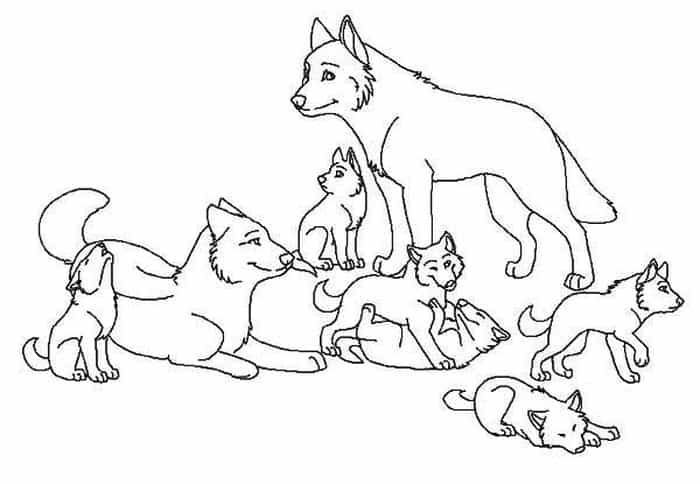 Alpha Wolf Coloring Pages Pictures